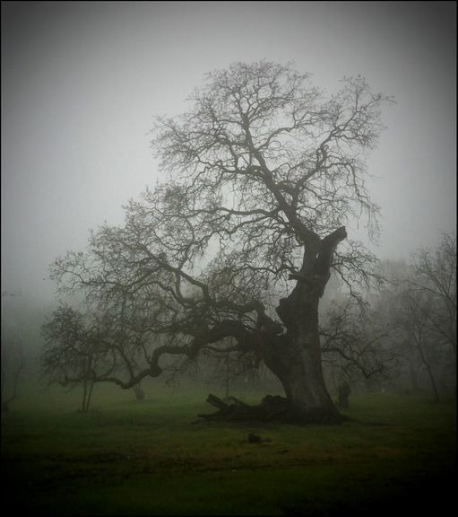Max_height_fogtree